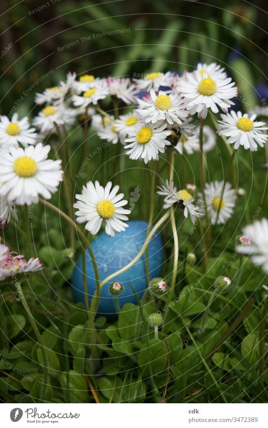 Anticipation of Easter Easter egg Meadow Daisy egg hunt easter sunday Ritual need children's fun Christian festival Hiding place Grass Green Blue