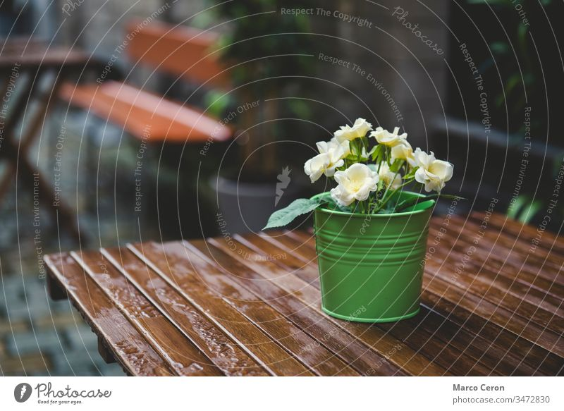 green pot with yellow flowers on a wet wooden table background beautiful city cool day decoration fresh garden leaf light natural nature plant potted rainy