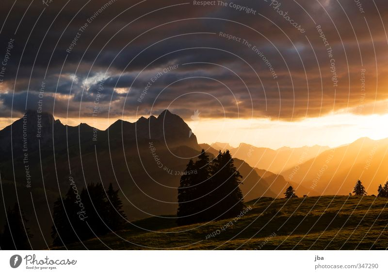499 - Evening mood Harmonious Well-being Contentment Relaxation Calm Freedom Summer Mountain Nature Landscape Autumn Beautiful weather Fir tree Meadow Alps Peak