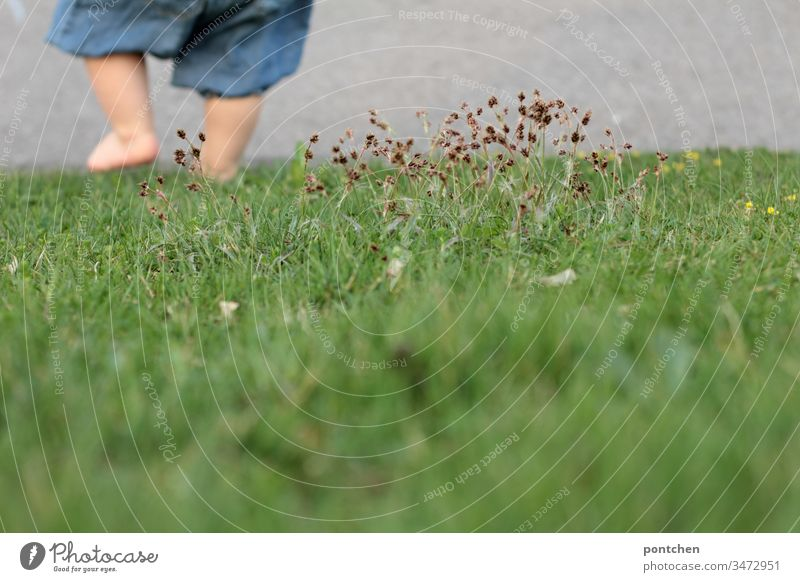 Child goes downhill over a meadow with bare legs. You can only see parts of the lower body Toddler Legs Walking Going foot body part grasses Meadow Grass