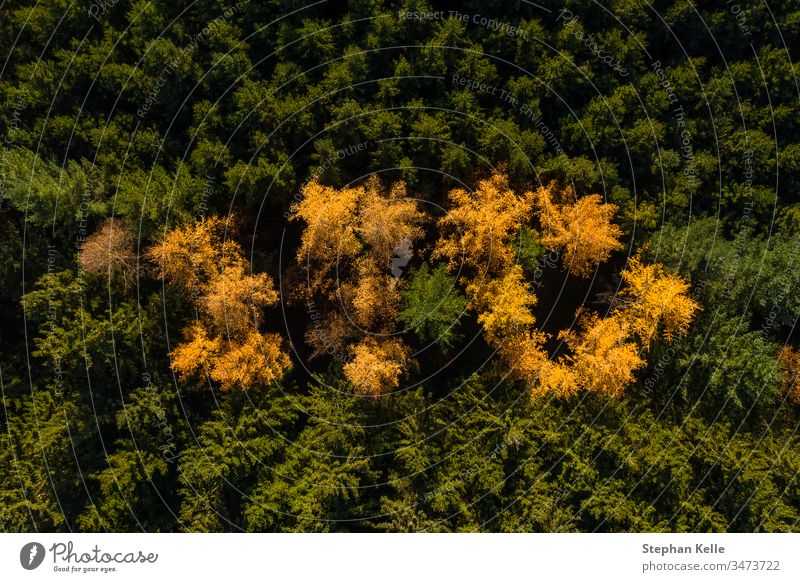 Aerial perspective of autumn forest with green and yellow colored trees. aerial fall drone copter contrast nature travel scenic beautiful natural colorful