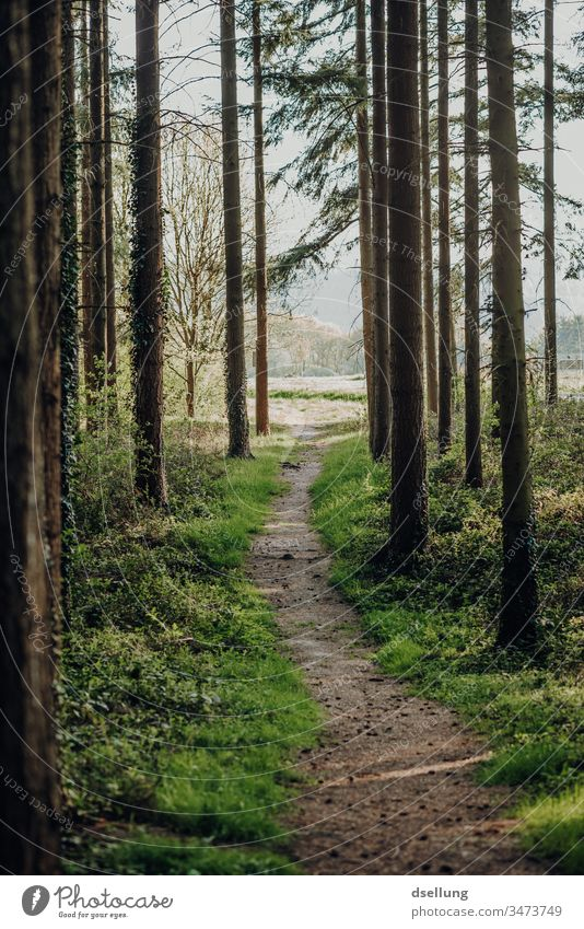 Forest Way into a clearing Lanes & trails off Woodground Clearing Forest walk Forest atmosphere trees Deserted Colour photo Environment Tree Landscape Nature