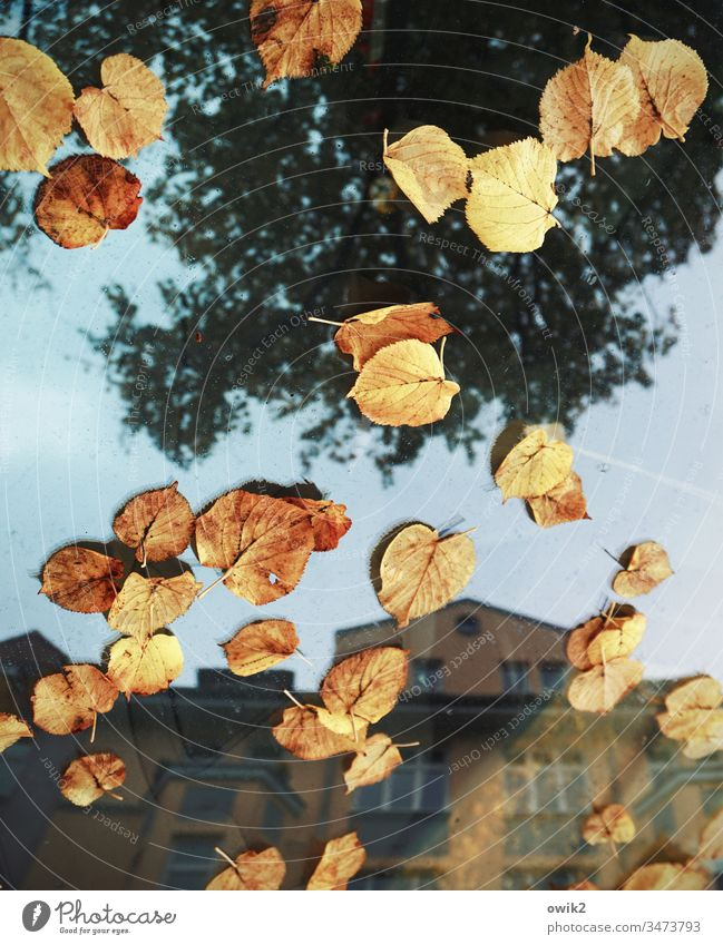 Provisionally Autumn Autumn leaves Leaves Car Vehicle FRontwheel Glass reflection Reflection Town House (Residential Structure) Tree Sky Exterior shot Street