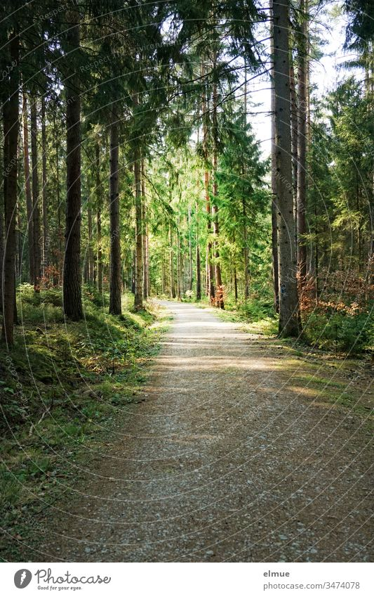 dark forest path leading into the light Forest off Tree Light Lanes & trails Deserted Nature Exterior shot Landscape Calm Peaceful Coniferous trees