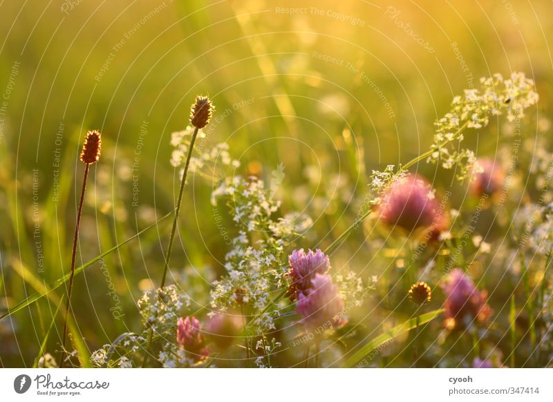 Nature Green Beautiful Summer Flower Warmth Meadow Grass Garden Bright Pink Dream Contentment Field Growth Illuminate