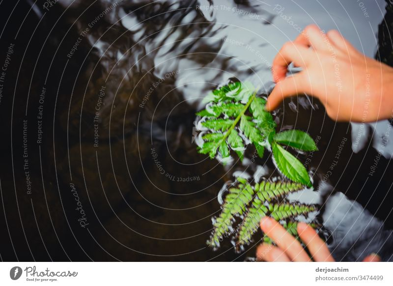 Children's hands place green leaves in a gently flowing river. Exterior shot Colour photo Leaf Nature Deserted naturally Close-up pretty Green Plant Growth