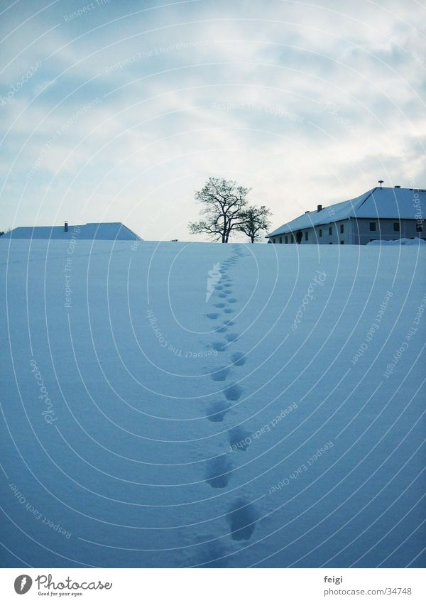 Tree Winter Snow Mountain To go for a walk Tracks Farm