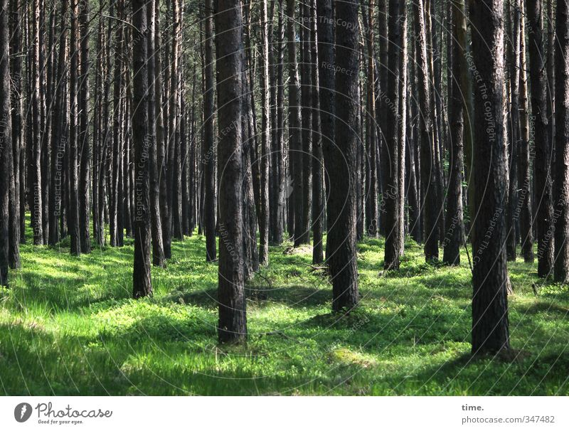 Nature Plant Tree Landscape Forest Environment Grass Sadness Natural Moody Power Contentment Arrangement Beautiful weather Protection Mysterious