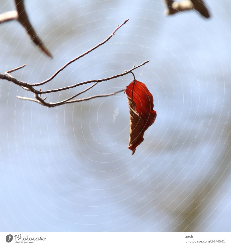 autumnal leaf hanging from a branch Autumn flaked foliage Autumn leaves Branch Lake Blue Gray Nature tree Autumnal Autumnal colours Twigs and branches Plant