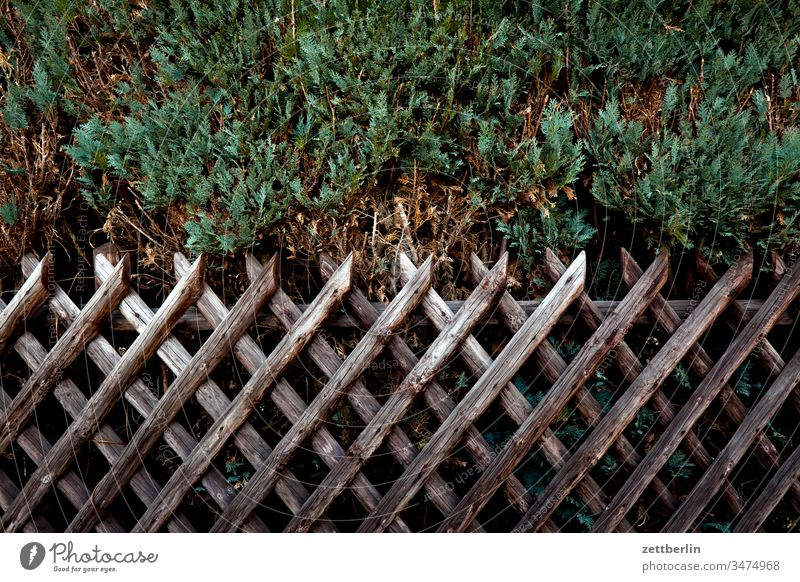 Hunter fence with Thuja Fence Wooden fence Garden fence lattice fence hunting fence Real estate Boundary line Border Neighbor neighbourhood Screening Hedge