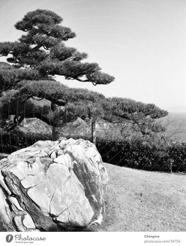 Stone Japan Zen Pine Buddhism Shizuoka