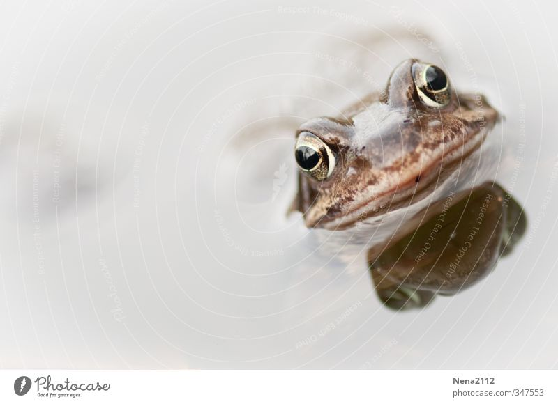 Frog from a bird's eye view Environment Nature Animal Water Spring Summer Climate Garden Park Field Forest Pond Lake Animal face 1 Breathe Hang