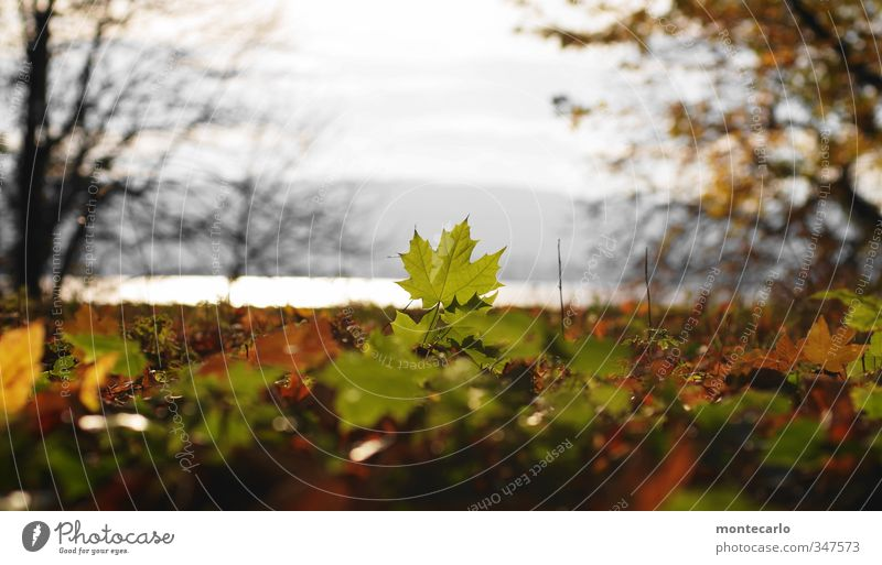 With lake view Environment Nature Plant Sun Sunlight Autumn Beautiful weather Tree Leaf Foliage plant Wild plant Park Lakeside Thin Authentic Natural Dry Warmth