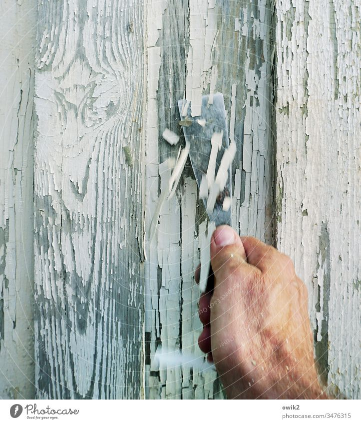 The squirrel laboriously feeds labour Hand putty knife scrape off Colour Flake off Diligent observantly Tiring tedious Wall (building) Arbour ColorRemains