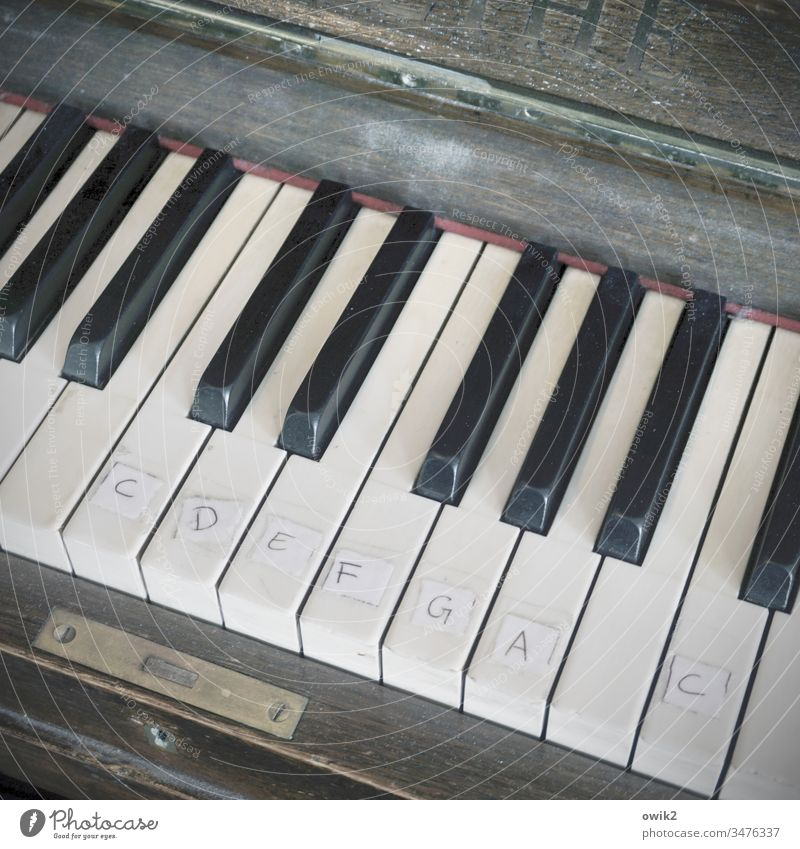 Silent H Piano Old fumble Scale dusty Study Help Solutions Improvise Emergency solution tones out of tune Interior shot Detail Keyboard Play piano