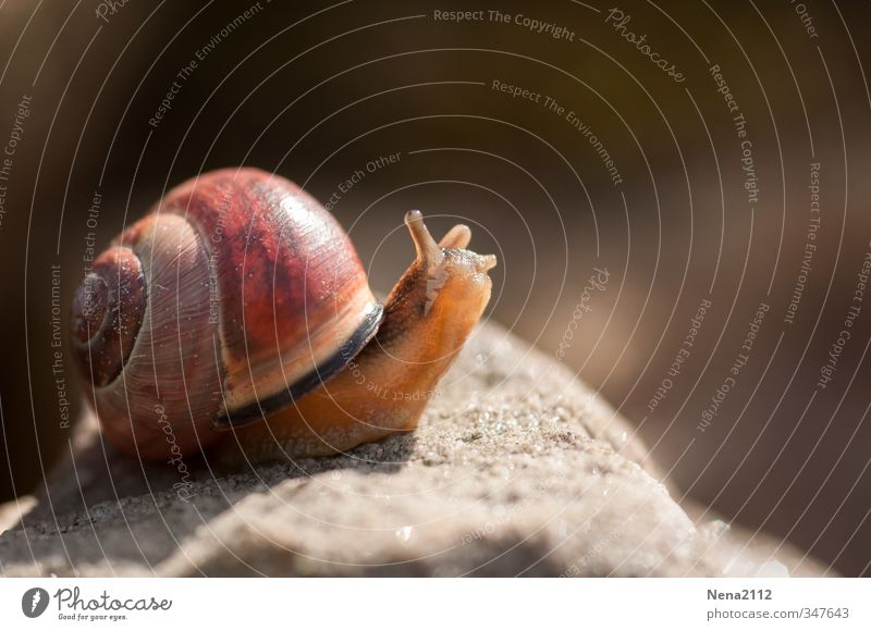 Nature Animal Environment Small Brown Going Running Snail Slimy