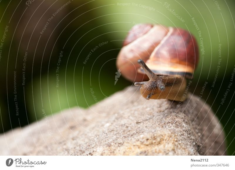 Review: 200 made! Environment Nature Animal Beautiful weather Snail 1 Rotate Success Slimy Brown Memory Colour photo Exterior shot Close-up Detail