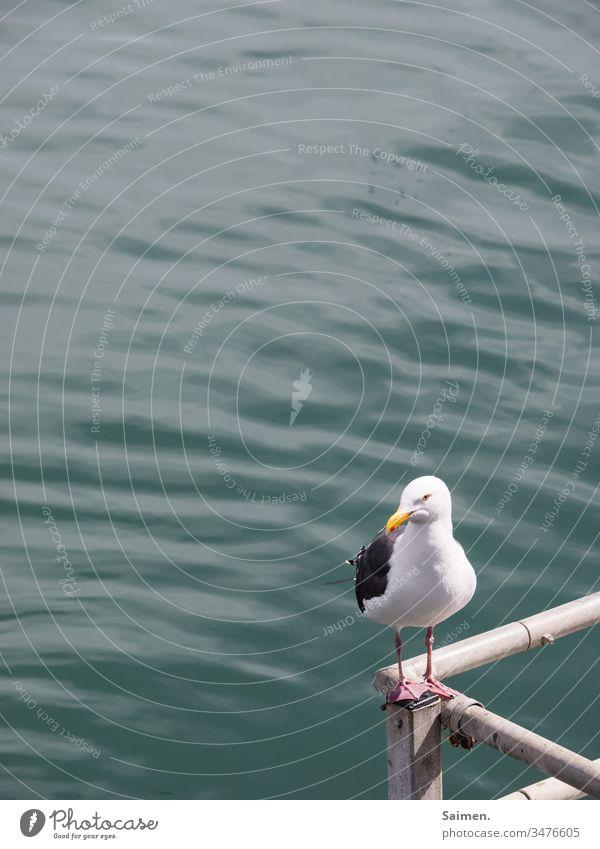 Eckenkind Möve Vogel Vogelwelt Tier Tierporträt Natur Meer Wasser Geländer Federn Schwingen Lebewesen Vögel Ozean