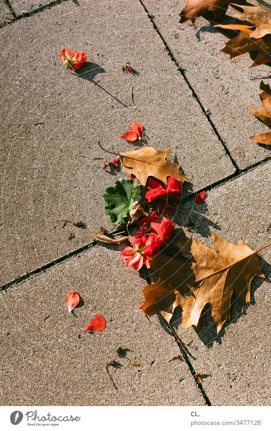 leaves on the floor Leaf Ground Autumn Autumnal Exterior shot Nature Colour photo Deserted Brown Red Blossom Seasons To fall plan Autumn leaves off