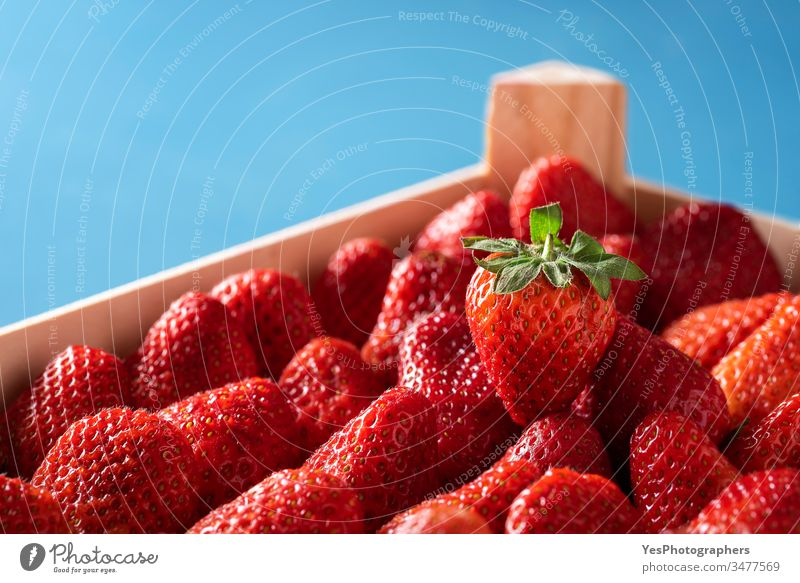 Strawberries in a box. Ripe organic strawberries close-up agriculture blue background colorful container crate crop delicious dessert diet dietary food fresh