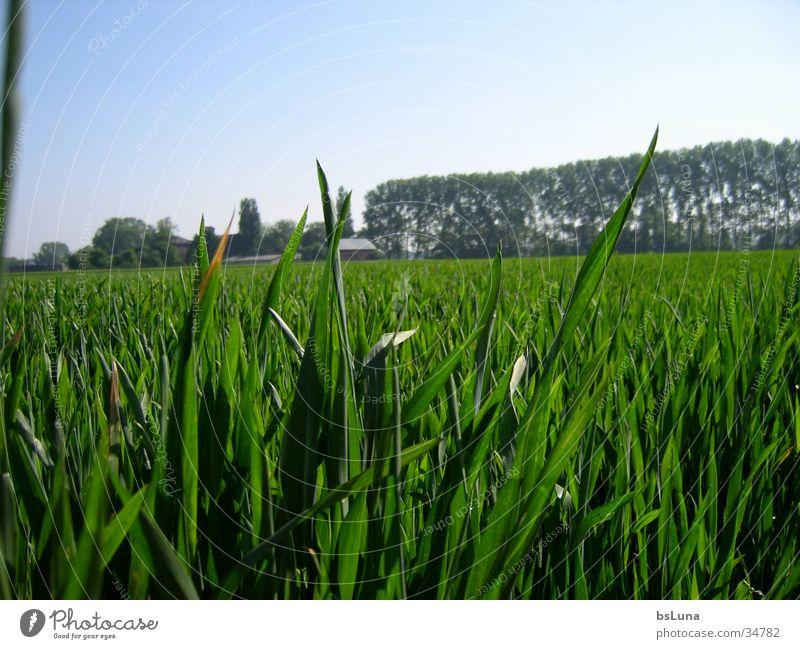 Nature Sky Tree Green Grass Landscape Field Grain Mill
