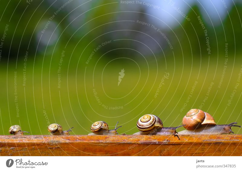 Nature Animal Natural Going Wild animal Hiking Beautiful weather Trip Attachment Snail Animal family Family outing