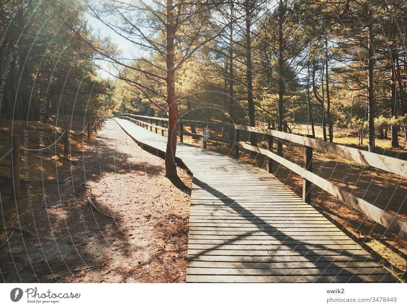 orphan off Nature nature trail Wood wooden planks Handrail Forest out Exterior shot Landscape Lanes & trails Colour photo Environment Tree Deserted Sky Plant