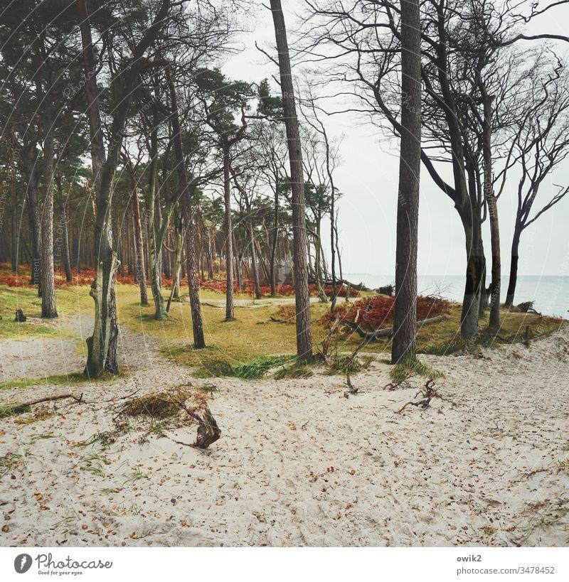 Sandbox Darss Beach Baltic Sea Coast Ocean Sky Nature Water Colour Western Beach Fischland-Darss-Zingst trees Cloudless sky