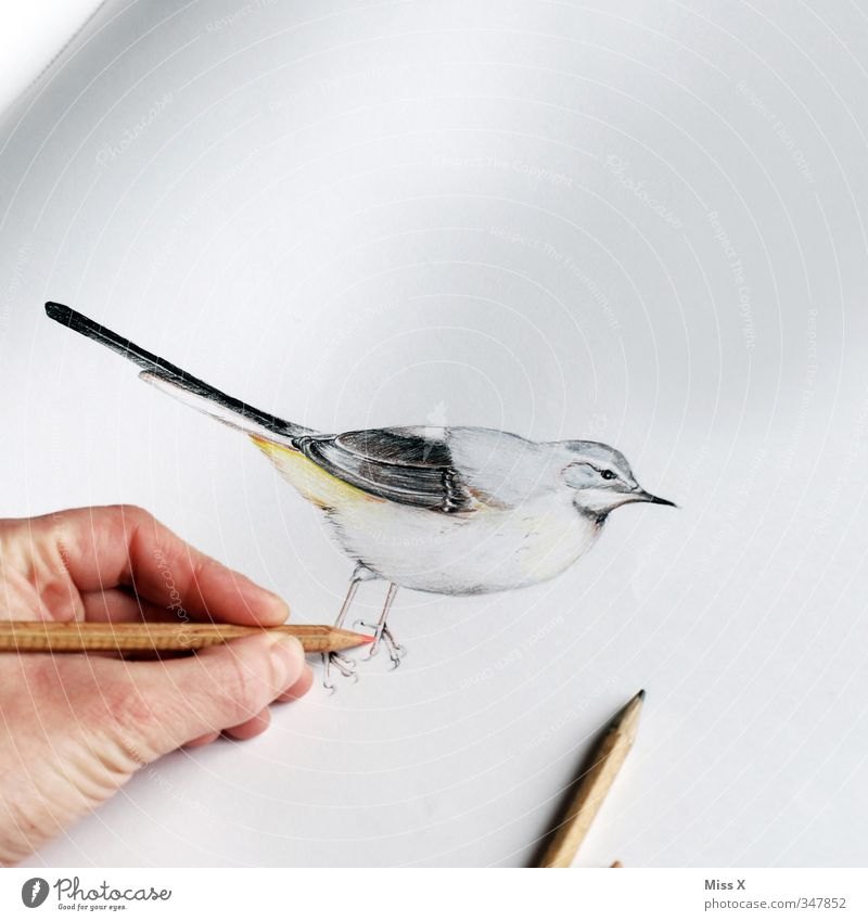 Animal Art Bird Leisure and hobbies Fingers Painting (action, artwork) Creativity Painting and drawing (object) Draw Pen Artist Drawing Work of art Painter