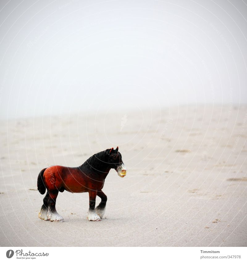 Sand horse. Environment Nature Water Bad weather Beach North Sea Denmark Animal Horse 1 Plastic Simple Brown Gray Black Emotions Toys Playing Colour photo