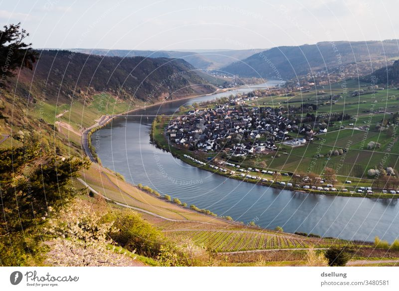 View over green vineyards on the Mosel, which are beginning to sprout Freedom panorama Environmental protection Climate protection Appealing enjoyment To enjoy