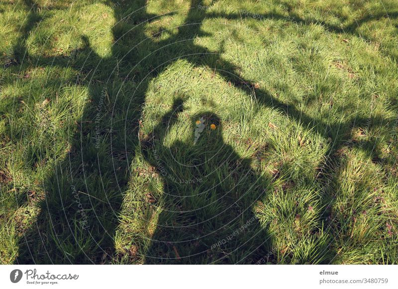 Shadow of waving person and tree on green meadow with yellow dandelion blossoms as apparent eyes Shadow Specter Tree Humor Meadow Green Blossom Funny fun