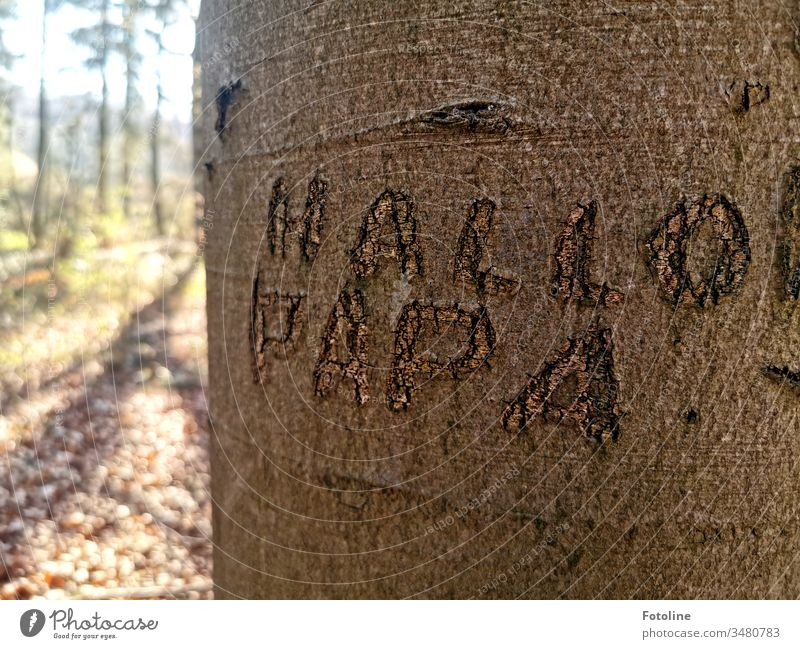 "Hi dad! - or a tree with ""Hello Daddy"" carved into the bark. Forest Tree Nature Landscape Exterior shot Deserted Colour photo Environment Day Plant Natural"