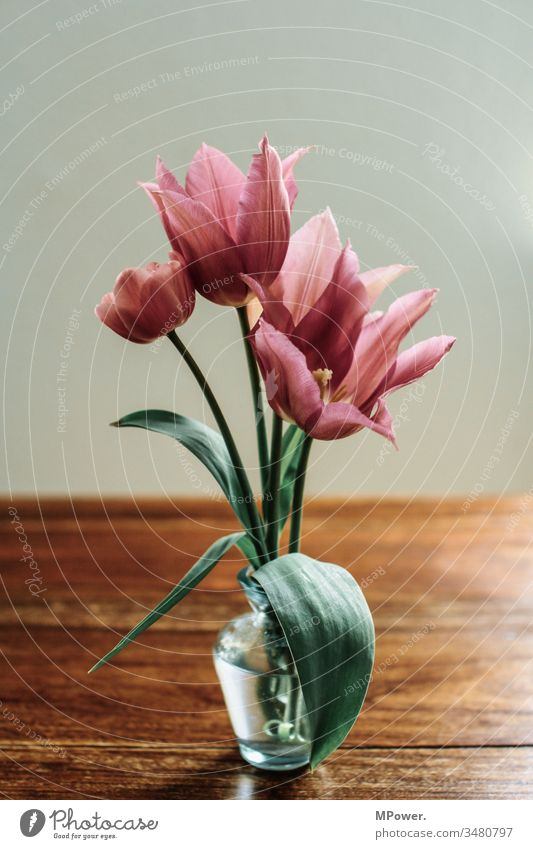 tulip season tulips flowers Flower vase Table Pink blossom Spring variegated Beautiful
