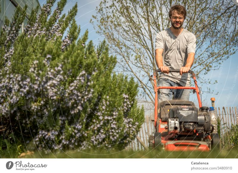 The young man is mowing the lawn in the best spring weather, rosemary is blooming on the left side of the picture. cut grass Worm's-eye view Grass Garden Nature