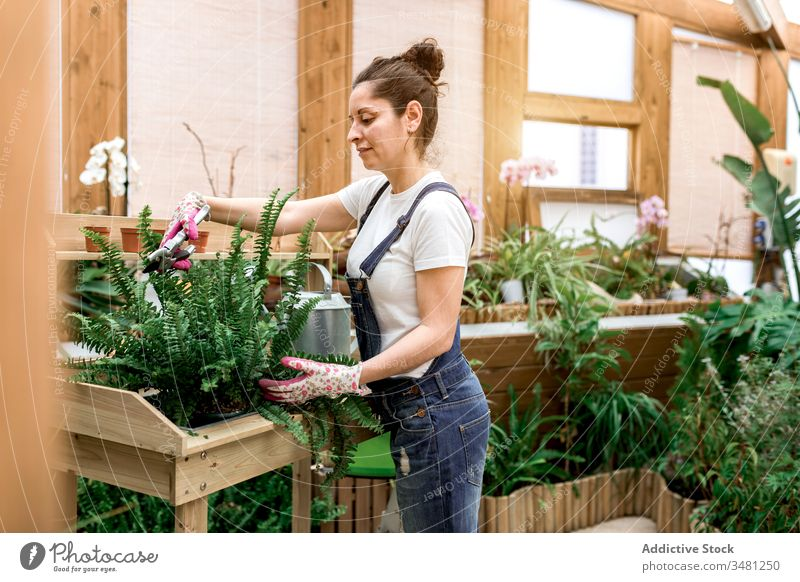 Woman gardener cutting leaves of plant woman leaf fern hothouse care smile female botany flora florist green fresh growth natural organic table glasses glove