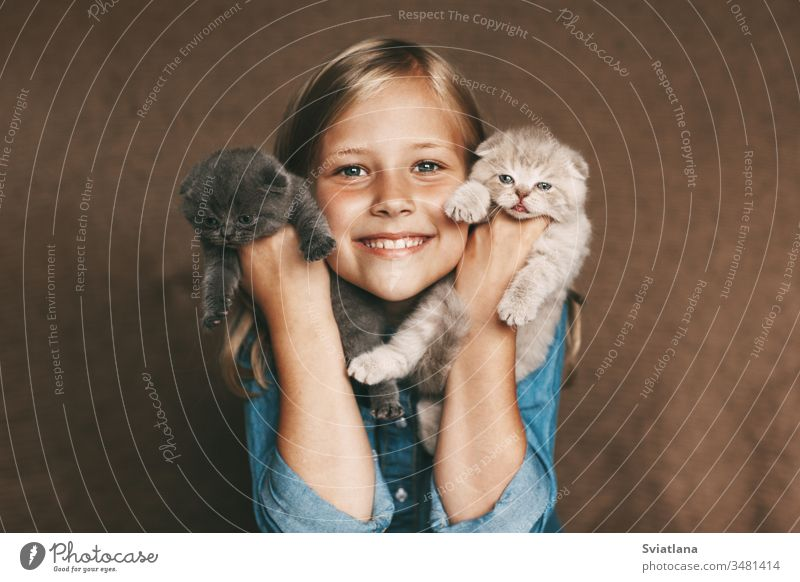 The child holds beautiful British kittens of different colors in the hands of female woman happiness smile little white cheerful portrait kid mother caucasian