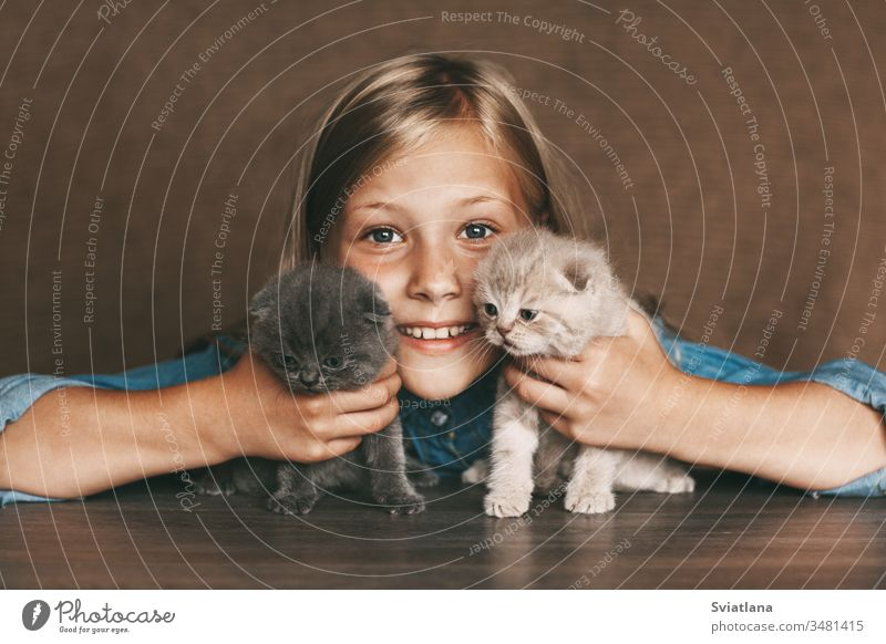 The child holds beautiful British kittens of different colors in the hands of lifestyle little white closeup health caucasian kid home healthy woman table