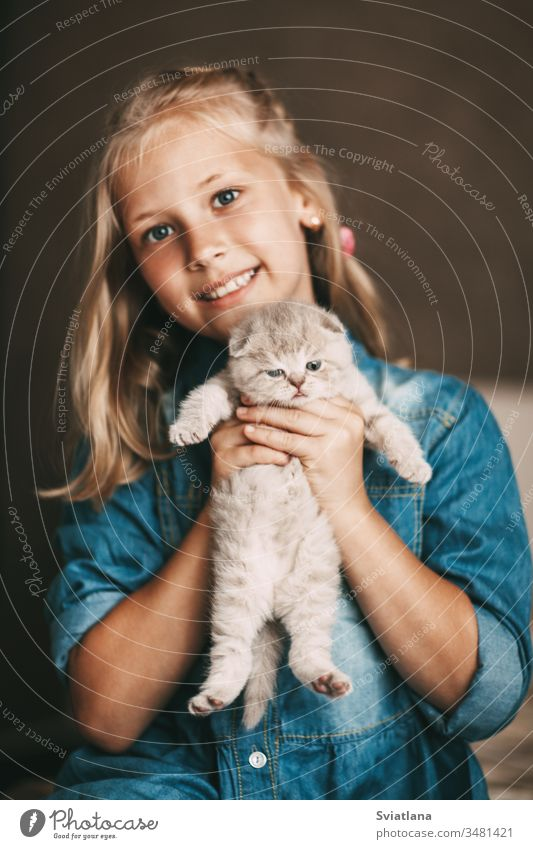 Girl hugs and plays a british little kitten beautiful portrait person female cheerful smile happiness caucasian white hair holding woman beauty adorable