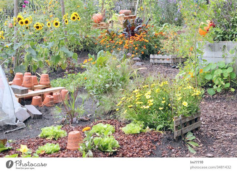 Favourite place garden clay pots Clay pot repot flowers Herbaceous plants Gardening Pumpkin Sunflowers Summer Favorite place hobby Insight Joy fun Relaxation