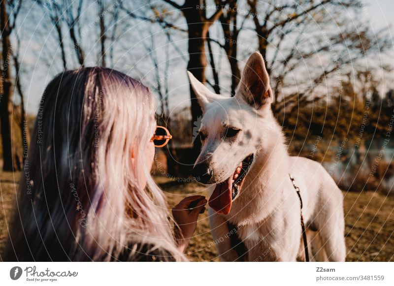 Mistress with dog Dog walk upbringing Pet workout delectable bribe Summer Sun Warmth Shepherd dog White Beauty & Beauty observantly Love of animals kind Woman