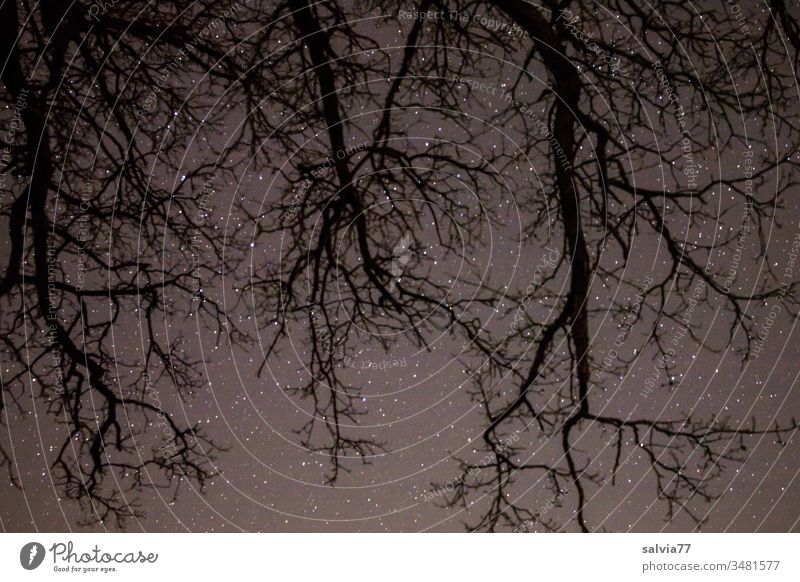 Starry sky with root-like branches in the foreground Night Nature Environment Tree Branches and twigs Astronomy stars Deserted Exterior shot Night sky