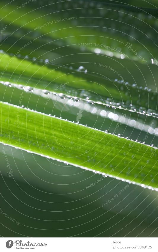 Water droplets. More. Nature Plant Drops of water Sunlight Spring Summer Grass Stripe Network Glittering Illuminate Growth Esthetic Simple Fresh Wet Natural