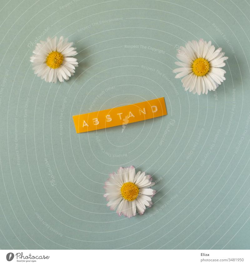 3 daisies with the lettering distance, symbolizing the concept of social distancing outside during the corona crisis and in spring and summer gap
