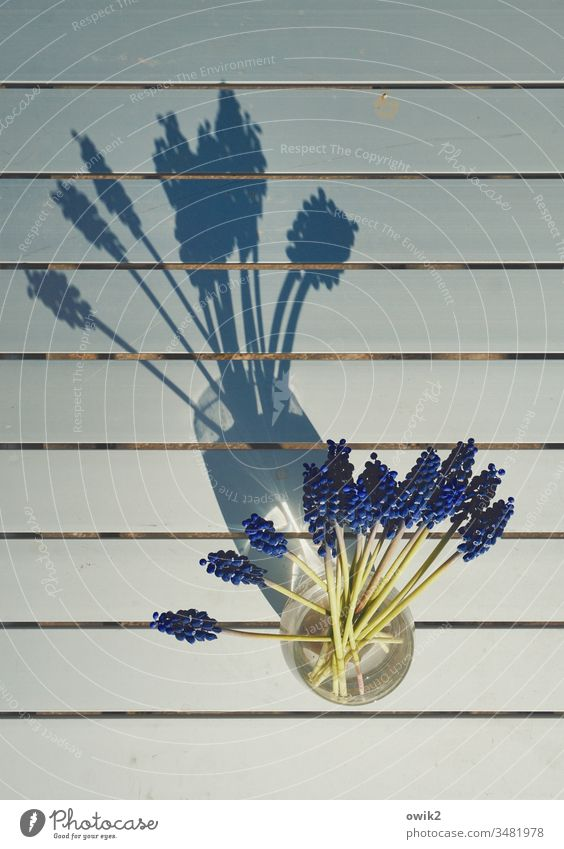 compartments Muscari Vase Small view from above Table Metal lines Shadow Sunlight Spring small blue Colour Guide Flower Colour photo Plant Deserted Blue Blossom