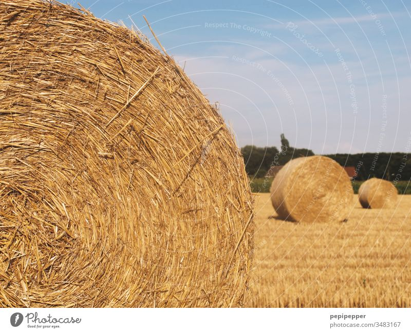 Crop circles, round bales of straw lying on the harvested field Straw Bale of straw Field Sky Summer Agriculture Harvest Nature Grain Yellow Warmth Hay bale