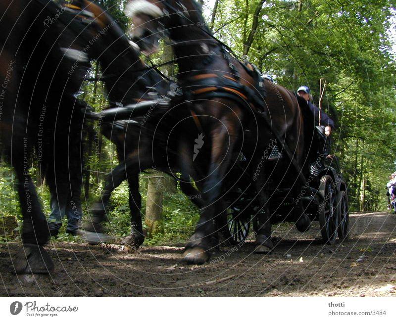 speed Horse-drawn carriage Chauffeur Coachman Carriage and four Motion blur Haste Dynamics