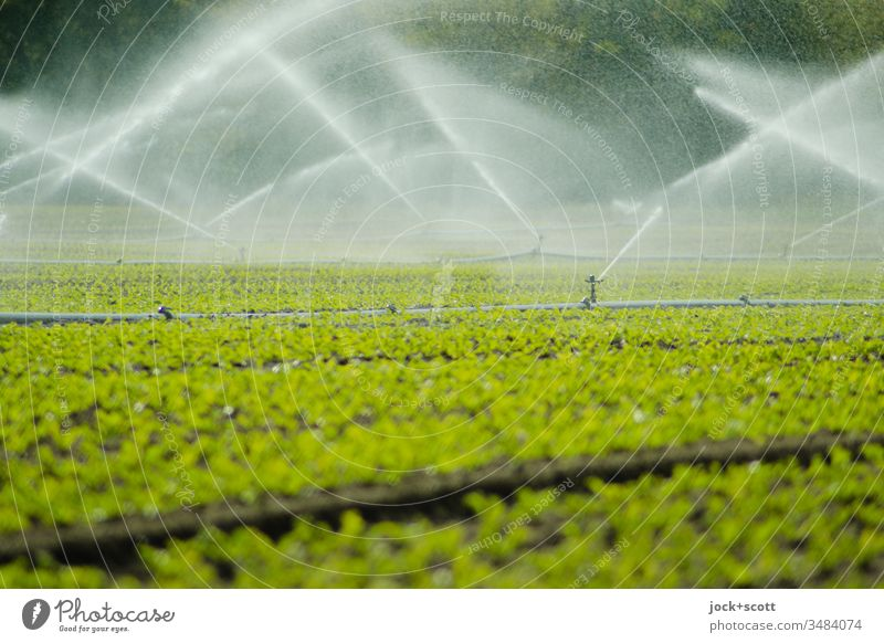 Green field is blown up with lots of water Field Cast Water green Fresh Blow up Motion blur Irrigation Foliage plant irrigation civilized wax Sprinklers System