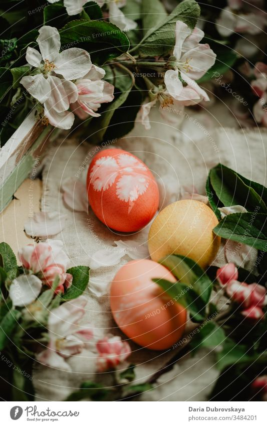 Easter eggs and apple tree flowers colorful background food nature decoration tradition season white petal beautiful spring holiday happy pink symbol fun