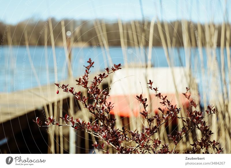 Red motor boat at the jetty of a lake, in front of it a dark red plant and reed grass Lake Motorboat Footbridge Plant twigs Sun Spring Wait Normality Water